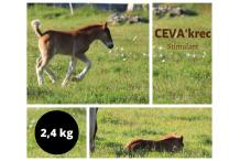 CEVA'krec 2,4 kg